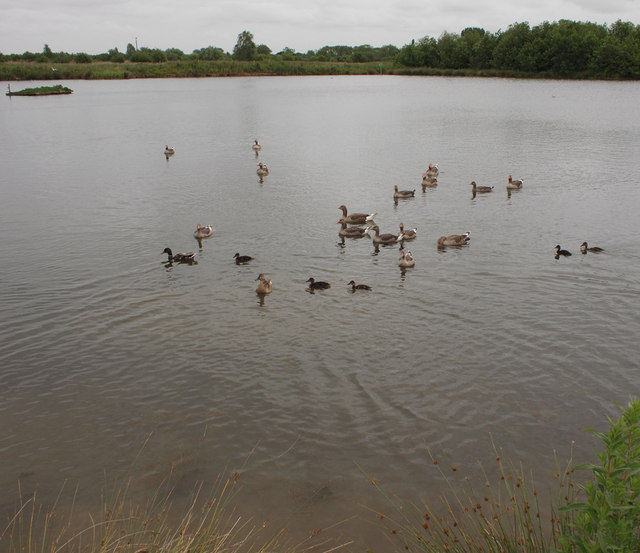 Lake with Waterfowl