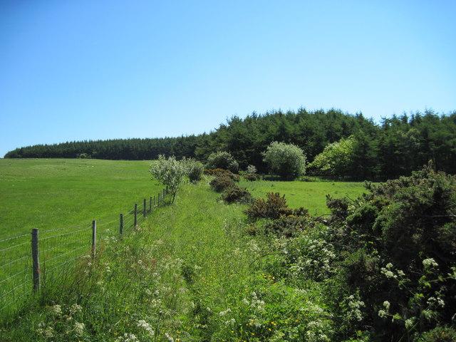 Path  to  Hutton  Mulgrave  Wood