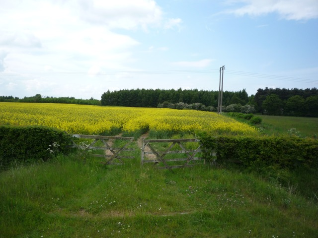 Rape field off New Road