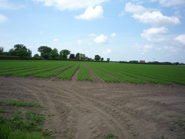 Farmland near Deighton