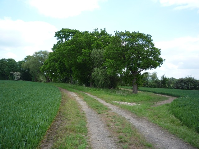 Tree clump along bridleway