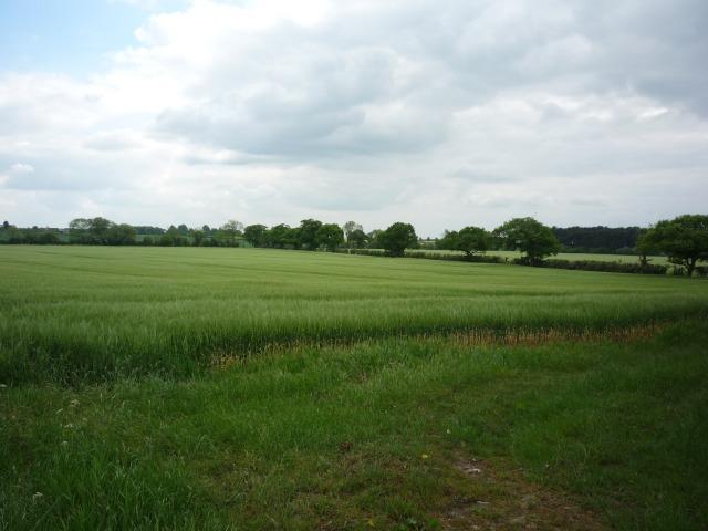 Barley off Benjy Lane bridleway