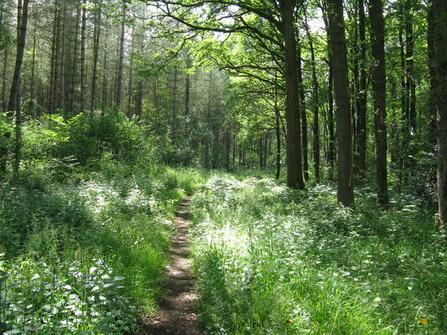 Bridleway in Lower Lagfold Copse