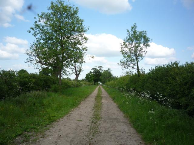 Benjy Lane
