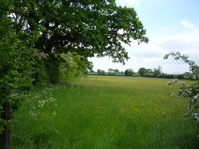 Field opposite Brick Farm