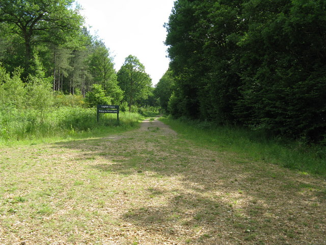 Restricted riding in Lagfold Copse