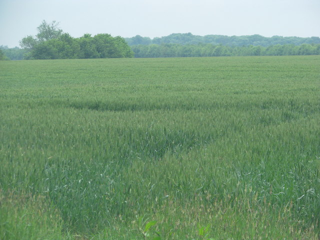 Large field by Haseley Wood
