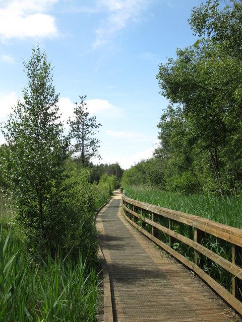 Boardwalk in Elvetham Heath local nature reserve