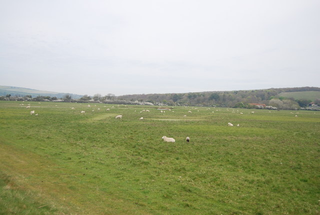 Sheep, floodplain of the River Cuckmere