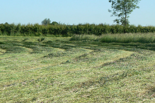 New mown hay