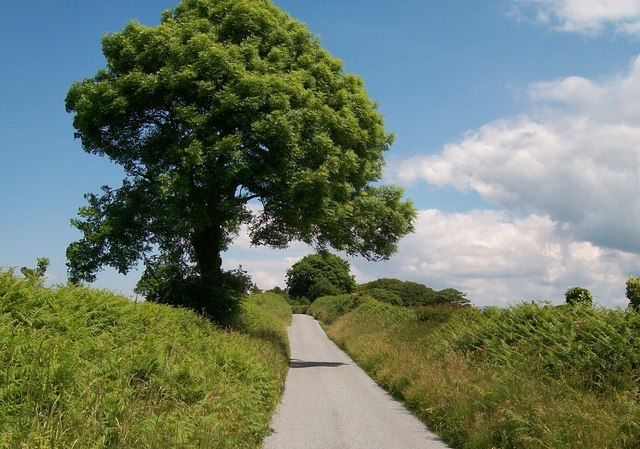 Trees and hedgerows along Lon Denio