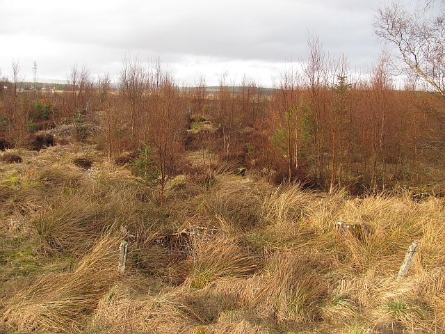 Regenerating woodland beside the River Tirry