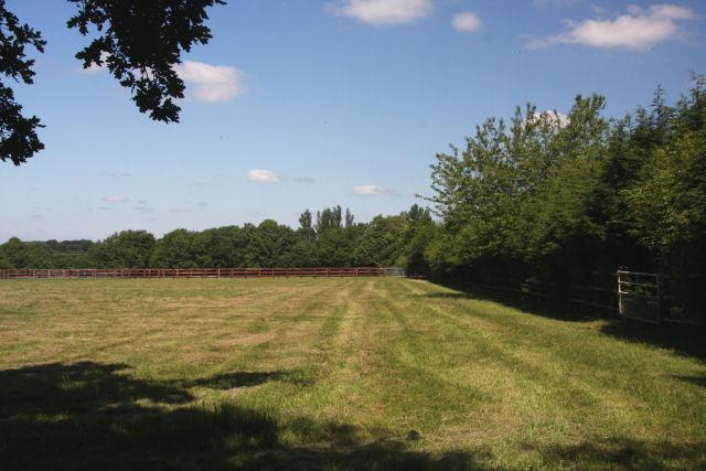 Paddocks near Cheveley