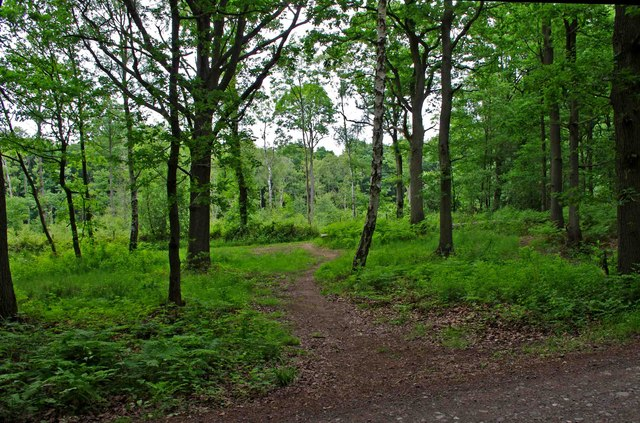 Wyre Forest near Uncllys Farm
