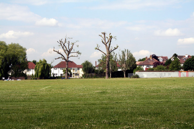 Croydon:  Polled trees in South Norwood Recreation Ground