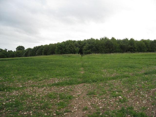 Plantation behind Maidenwell Manor Farm