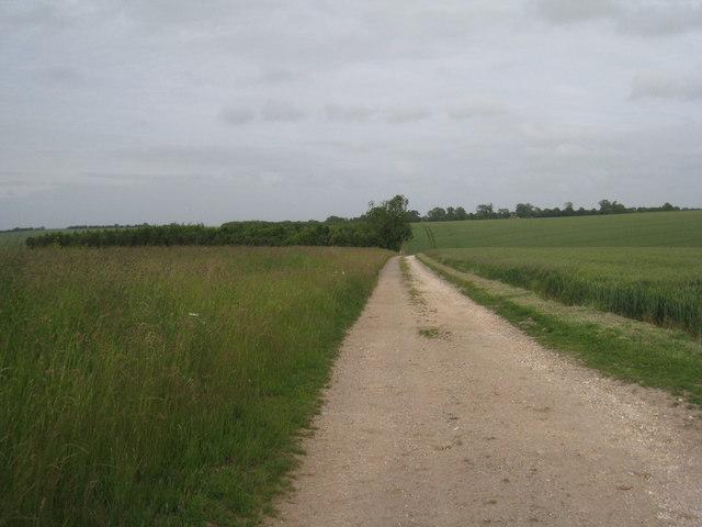 Fields and Plantation near Maidenwell