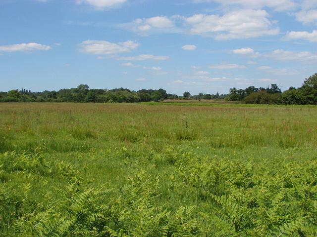 Fairoaks, rough grassland