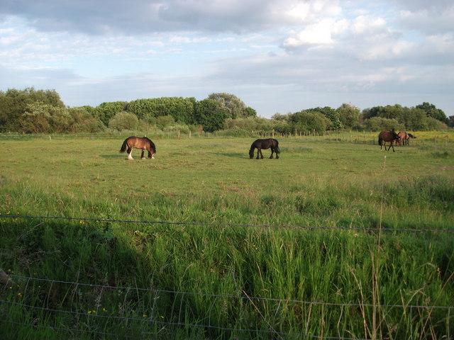 Hall Farm Stables, Broken Bank Urmston Meadows
