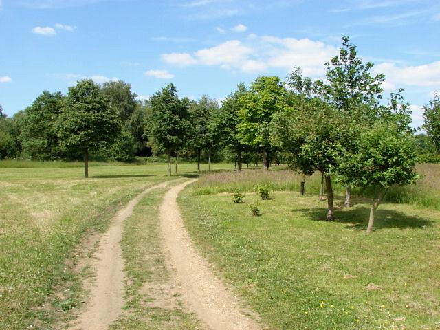The Mclaren Park