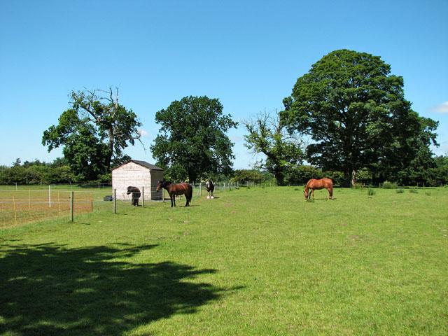 Horse pasture, Little Massingham