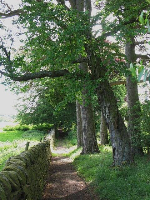 Path near Thornley Gate
