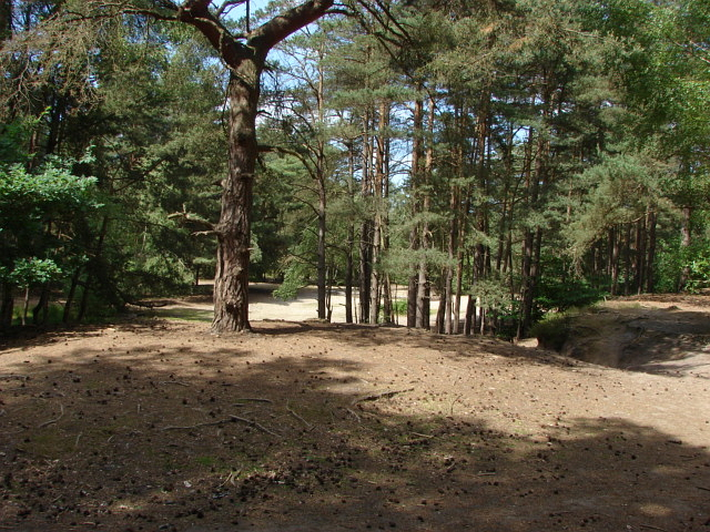 Horsell Common