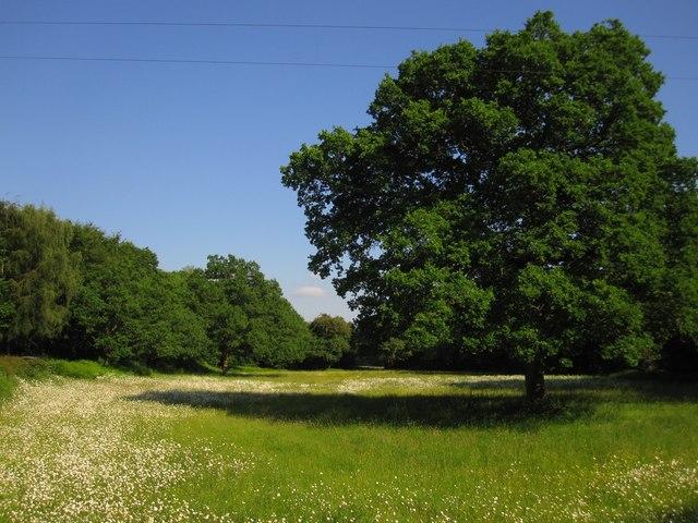 Llanstephan: Summer grassland by the River Wye