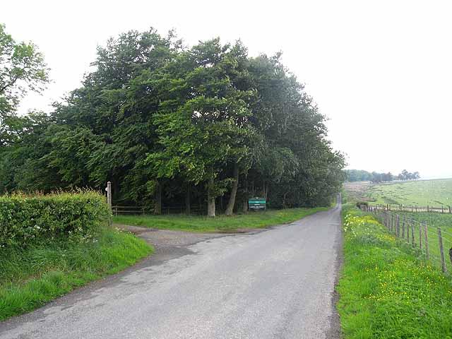 Bettws Hill Wood