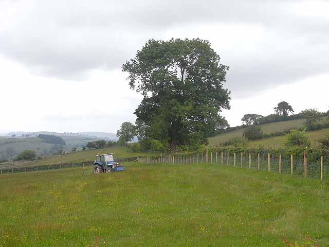 Flower-rich meadow, Dowke Hill