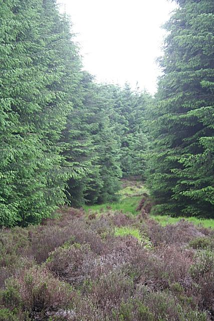 Fetteresso Forest