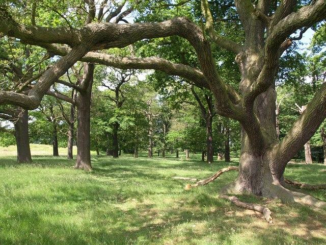 Conduit Wood, Richmond Park