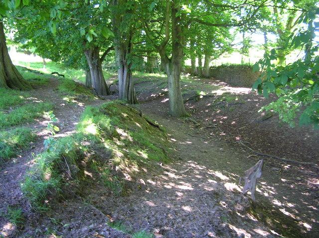 Hollow ways in Dyrham Park
