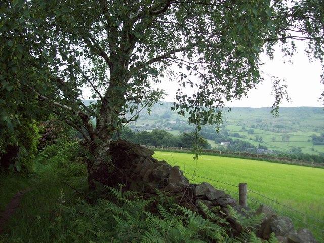 Footpath at the Edge of Bramley Wood