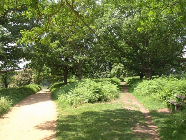 Paths, Richmond Park