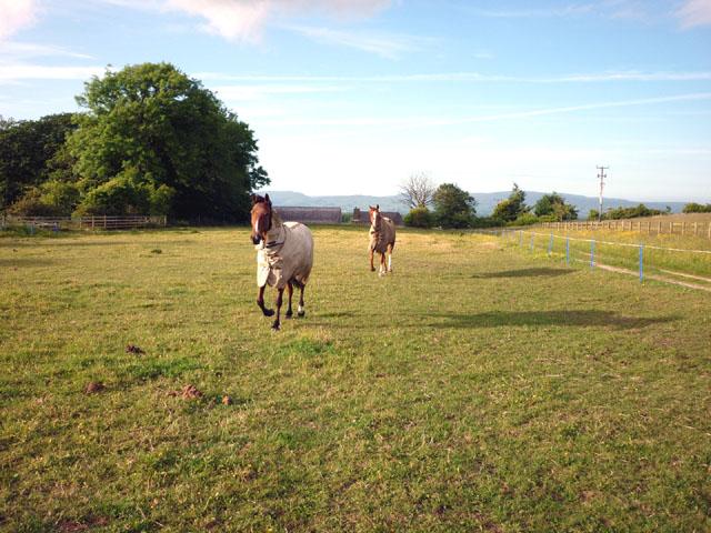 Rehabilitating horses, Whinney Hill