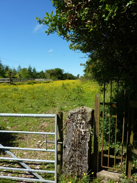 Gates and buttercup meadow