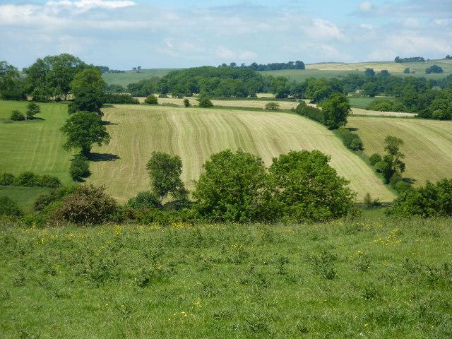 Wavy pattern in a field