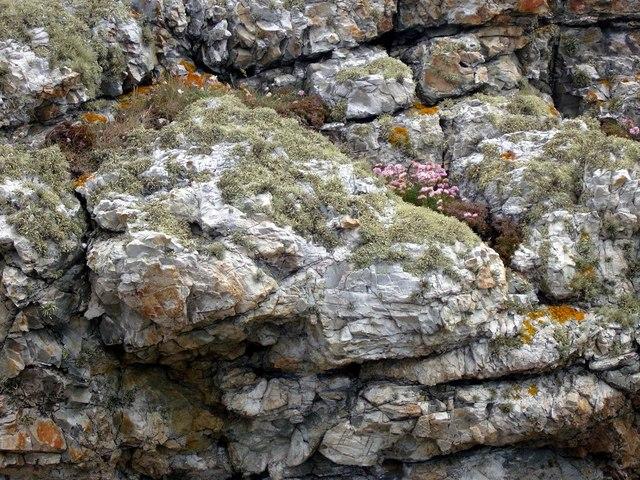 Wild flowers and lichens