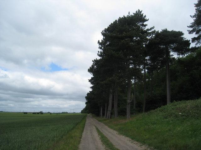 The western edge of Burton Wood