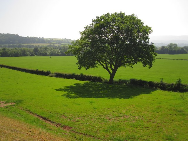Near Llyswen: Pasture land leading down to the Wye