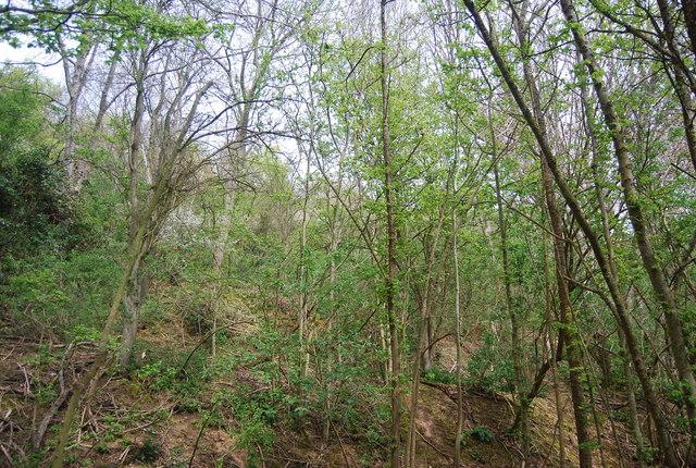 Wooded hillside, Friston Forest