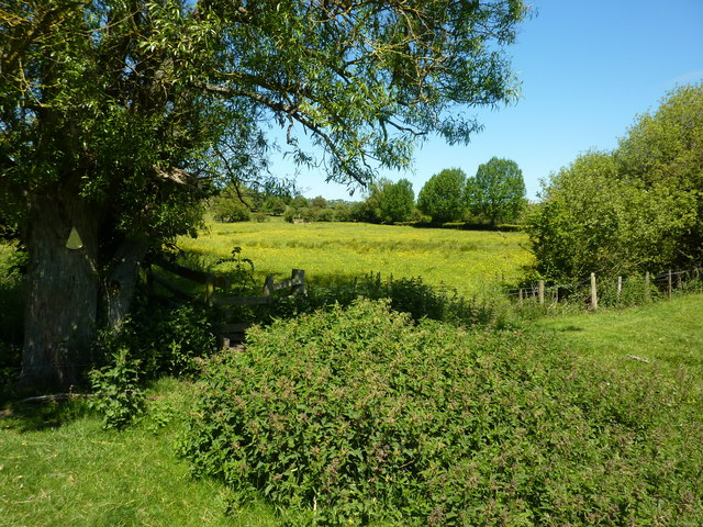 Clump of nettles and a willow tree