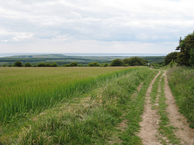 Bridleway on the South Downs
