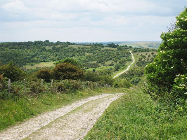 Track through Lullington Heath Nature Reserve