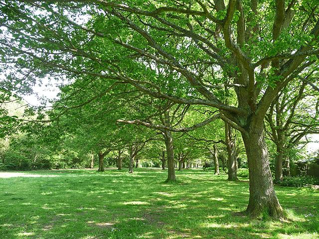 King's Wood, Sanderstead (2)