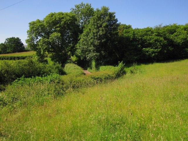 Summer grassland below Cefn Moel