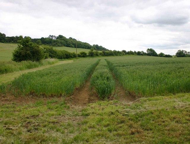 Field on Fant Hill