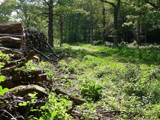 King's Wood, Sanderstead (3)