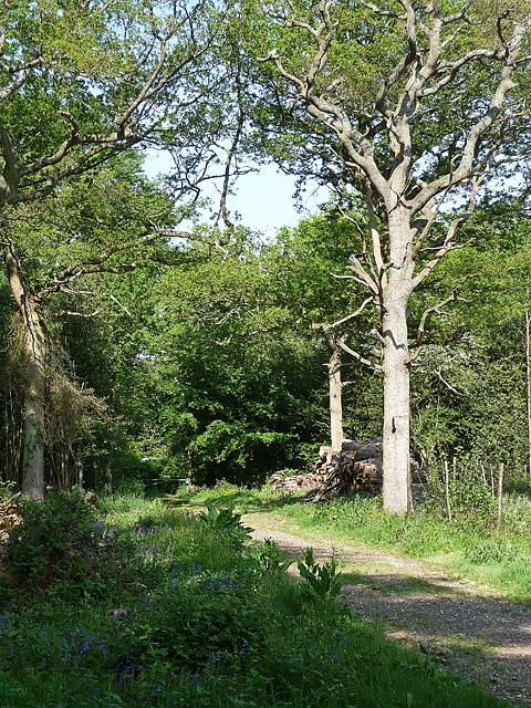 King's Wood, Sanderstead (4)